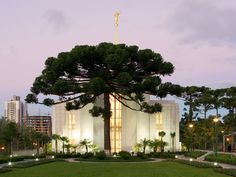 Dang tree is large and in charge. Seriously, what kind of tree is that? Curitiba Brazil Mormon/LDS Temple