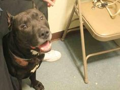 ★❥★ SAFE RTO 3/25/15 ★❥★ Brooklyn Center   TYSON - A1030127   MALE, BLACK / WHITE, AM PIT BULL TER MIX, 7 yrs OWNER SUR - EVALUATE, NO HOLD Reason LLORDPRIVA  Intake condition UNSPECIFIE Intake Date 03/12/2015 https://www.facebook.com/Urgentdeathrowdogs/photos/pb.152876678058553.-2207520000.1426373553./976161319063414/?type=3&theater