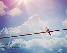 Nursery Art Pastel Purple Blue Sky Pigeon by HConwayPhotography, $48.00