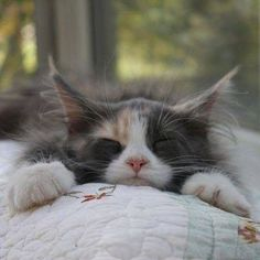 Kitty is having a well deserved nap!
