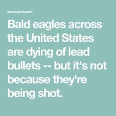 Bald eagles across the United States are dying of lead bullets -- but it's not because they're being shot.