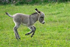 Git along lil' donkey, git along!~W