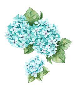 Watercolor hydrangea on Behance