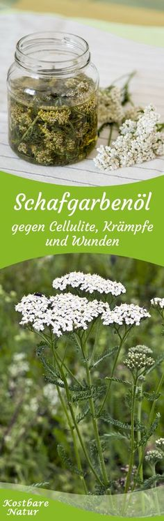 Die weit verbreitete Schafgarbe ist ein wirksamen Arzneikraut, das dir in einem … The common yarrow is an effective medicinal herb that can help you with abdominal cramps, headaches and migraines in an oil extract. Natural Medicine, Herbal Medicine, Home Remedies, Natural Remedies, Coconut Health Benefits, Medicinal Herbs, Natural Cosmetics, Homemade Beauty, Natural Healing