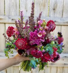 February 2019 - Botanical Brouhaha Summer Flowers, Cut Flowers, I Pick, Wedding Proposals, Urban Farming, Flower Pictures, Simple Weddings, Taking Pictures, Wedding Designs