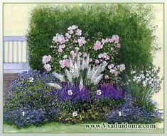 клематисы и розы - оформление цветника