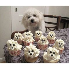 This originally had a caption stating the cupcakes are for the dog's bday...personally i wouldn't celebrate my dog's bday to this extent but they could me made for someone who loves dogs :) or for an event of some sort