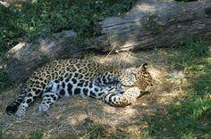 saint louis zoo | St. Louis Zoo