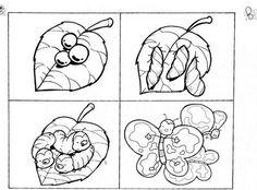 Riordino di immagini in sequenza - La sequenza della farfalla