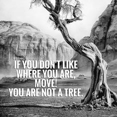 Sometimes we create our own roots and then we feel trapped. . . . . . . #virginiebb #mindset #positivity #instagood #instadaily #quotes #inspire #motivate #thrive #powerthinking #attitude #more #dare #takerisks #change #go #challenge #challengeyourself #quote #wordsofwisdom #wordporn