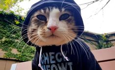 Kitty Kangaroo Mewgaroo Hoodie: When it comes to fashion in the crazy cat lady… #Cat_Fun #Shopping_Reviews #cat_hoodie #clothing #fashion
