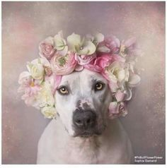 Adorable dog with flowers on his head.