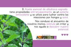 Aceite esencial de albahaca sagrada en cosmética casera natural
