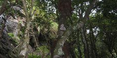 Senderos | Sitio Oficial de Turismo de La Gomera