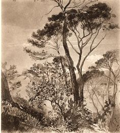 Study of Stone Pine at Sestri 1845 by John Ruskin
