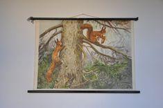 Originele Vintage Mid Century School grafiek. Rode eekhoorn. Pull-Down. Zweeds…