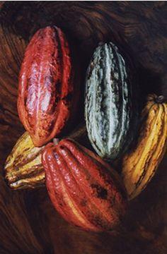 Semillas de cacao, México.