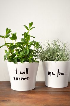 I will survive - DIY herbs planter #diy