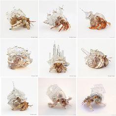 Hermit crabs in clear plastic printed shells. Hermit Crab Tank, Hermit Crab Shells, Hermit Crabs, Hermit Crab Habitat, Cpr For Dogs, Sculpture Textile, Saltwater Aquarium, Reef Aquarium, Carapace
