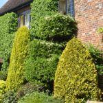Tree Surgeons, Garden Maintenance, 20 Years, Landscaping, Plants, Design, Yard Maintenance, Yard Landscaping