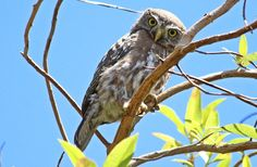 Free Jigsaw Puzzles Online - OWL  #Game #JigsawPuzzle #Puzzle