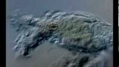 Vinzenz Ondrak - YouTube Philodina Rädertier Schräges Licht  Mikrokosmos - Leben im Wassertropfen - Wunderwelt unter dem Mikroskop