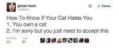 The primary function of the Internet is to philosophize about cats. Here are some of the very finest of those musings.