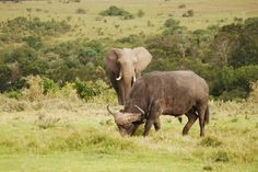 Lalibela Game Reserve and Safari Lodge, Addo Elephant Park, Eastern Cape, South… Elephant Park, Game Reserve, Tree Tops, South Africa, Safari, African, Games, Animals, Animales