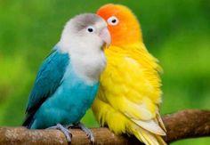 very pretty birds