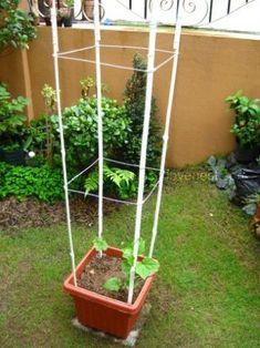 Sturdy DIY Bamboo Trellis in a Container #tutorial#bamboo #container #diy #sturdy #trellis #tutorial Pea Trellis, Bamboo Trellis, Garden Trellis, Garden Pots, Balcony Garden, Diy Bamboo, Bamboo Crafts, Bamboo Containers, Building A Trellis