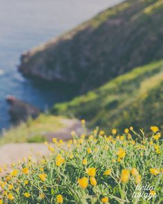 Travel Photo, Yellow Flowers, Summer Photograph, Landscape Photo, Seaside Print, Wall Decor, Green, Dark Blue Ocean Photo, Spring Flowers