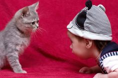 Four Life Lessons Cats Can Teach Your Kids | Catster