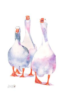 Geese print of watercolour painting A3 size G14216 by LouiseDeMasi