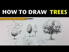 How to draw a tree in pen and ink - YouTube