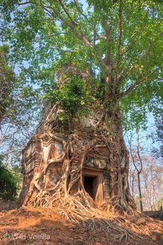 Prasat Pram, Koh Ker, Angkorian site in northern Cambodia.now that's a 'tree house' Koh Ker, Weird Trees, Unique Trees, Old Trees, Tree Roots, Nature Tree, Tree Forest, Tree Art, Tree Of Life
