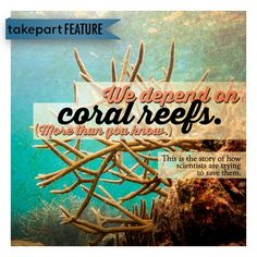 Coral reefs across the globe have been decimated by global warming. Can a simple solution give new life to the oceans' most invaluable ecosystems?