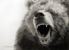 Grizzly bear ROAR