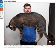 Casal desbanca 50 pessoas e é escolhido para adotar gato de 10 kg - Fotos - R7 Bichos