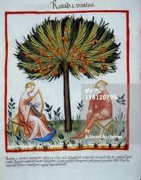 vienne tacuinum sanitatis - Szukaj w Google