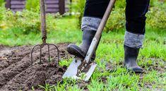 Kertészkedés kezdőknek – Lássuk az alapokat!