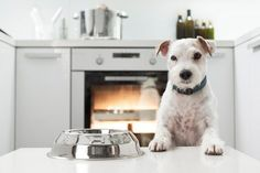 If you'd like to cook for your dog, all animal care professionals would agree that you should always use nutritionally complete recipes.