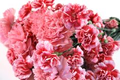 Carnations. I almost live these more than roses!
