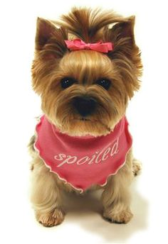 Spoiled Dog Scarf in Taffy Pink - precious for your spoiled fur baby! Available at http://doggyinwonderland.com/item_966/Spoiled-Dog-Scarf-in-Taffy-Pink--precious-for-your-spoiled-fur-baby.htm $13.00!