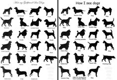 How my girlfriend sees dogs versus how I see dogs.