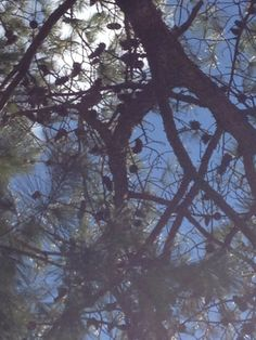 Love...the pine/sky contrast!