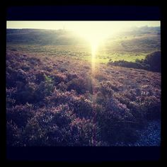 Autumn in the New Forest, England - @pocketstock- #webstagram