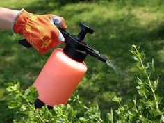Usos del agua oxigenada en el jardín
