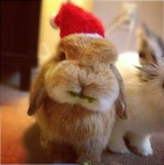 I need to crochet a mini hat for my Frida. Cute Christmas Rabbit