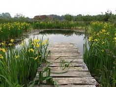 A pond like this would be beautiful and serene, but would you want on like this?  There's a secret to this pond.