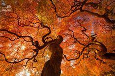 Shinjuku Gyoen, Shinjuku Tokyo, Nature Wallpaper, Hd Wallpaper, Leaves Wallpaper, Wallpaper Designs, Terre Nature, Fall Inspiration, Image Nature